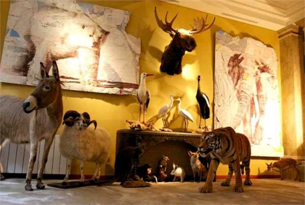 Звери и зверюшки в домашнем интерьере